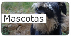 Mascotas en Sant Boi